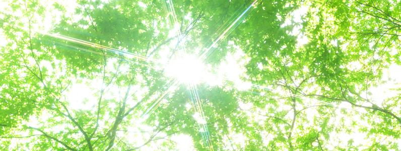 自然と共生する、地球に優しい照明です。